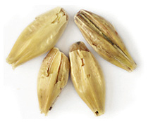 25 L. Gambrinus Honey Malt