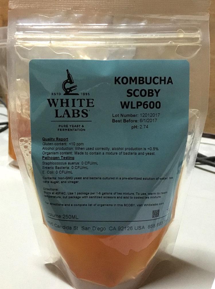 WLP600 Kombucha Scoby